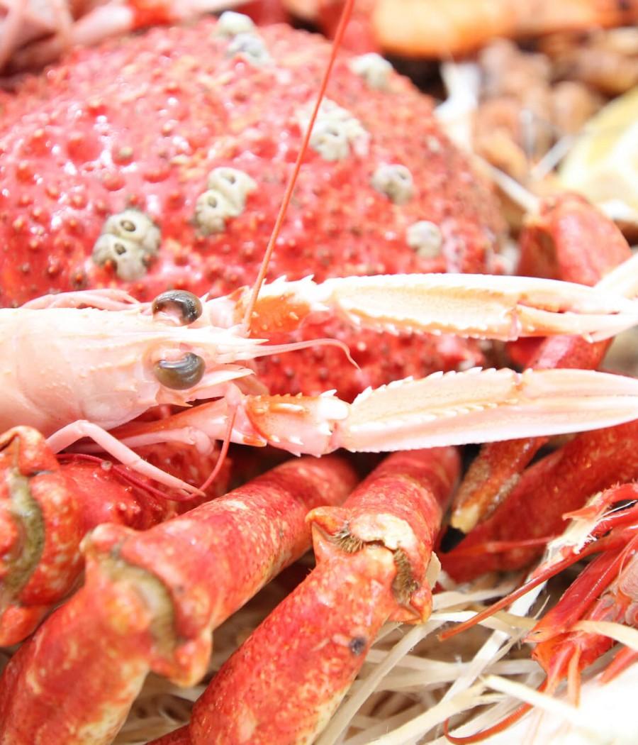 Crustacés 1 tiny